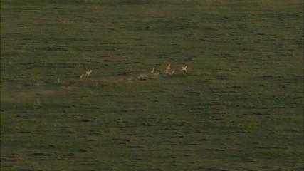 Grasslands Plain Prairie Deer