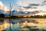Fototapeta Wetland in Pantanal, Brazil