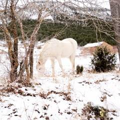 paisaje nevado en la sierra de Gudar en Teruel