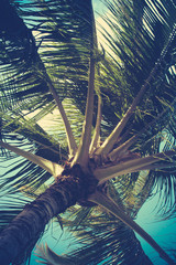 Retro Filtered Palm Tree Detail
