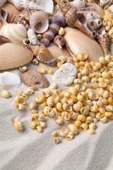 Sand and shells