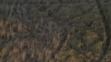 African Trees Savanna Wild Deer