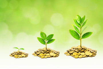 trees growing on coins / business with csr practice