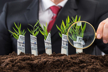 Businessman Holding Magnifying Glass In Front Of Money Plants