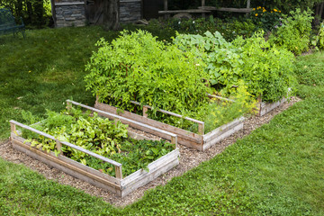 Vegetable garden in raised boxes