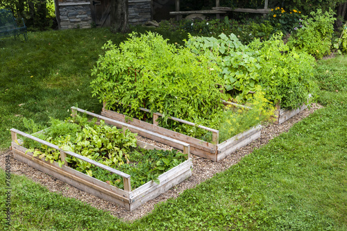 Vegetable garden in raised boxes - 76608594