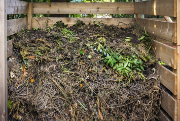 Yard waste in compost bin