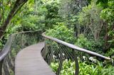 Kirstenbosch Tree Canopy Walkway, the Boomslang poster