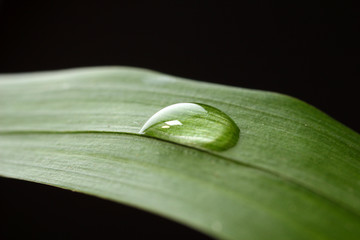 Dew drop on leaf on dark background