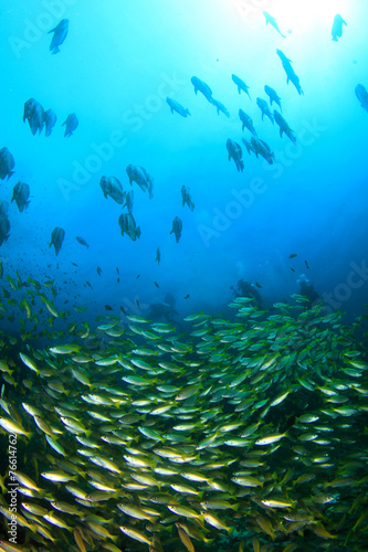 Poster Water planten School Snapper Fish underwater in ocean