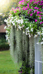 Spanish moss, Watercress flowers, petunia is garden arrangement
