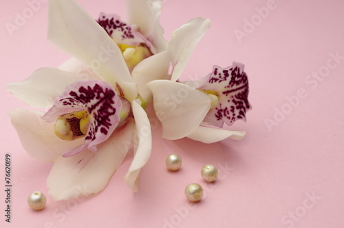 canvas print picture Orchideen