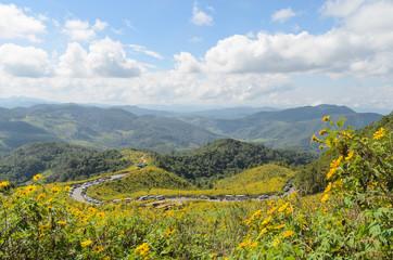 Mexican sunflower mountain at doi mae-u-kor maehongson thailand
