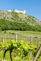 ruins of Devicky Castle with vineyards, Czech Republic