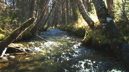 Net forest stream