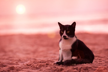 Cat siting on the beach at marsala colored sunset