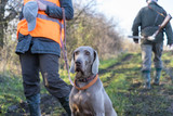 Hunting dog waiting to get command from gamekeeper.