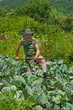 Gardener with hoe 5