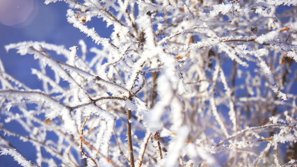 Beautiful frozen branch, realistic cold weather