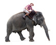 cheerful tourist rides on an elephant carrying a suitcase