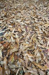 Beautiful carpet of fallen golden maple leaves