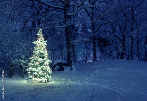 Poster Bomen Christmas Tree in Snow