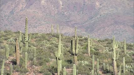 Arizona Desert Cactus Mountains