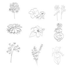 iris flowers, hibiscus, rose, narcissus, vector
