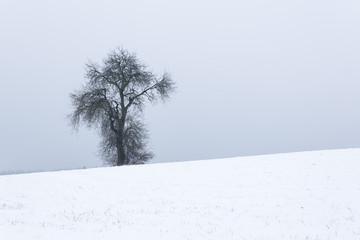 Einzelner kahler Baum in einer Winterlandschaft