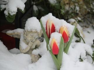 Verschneites Grab mit Engel und Tulpen