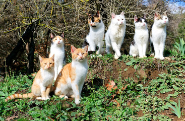 Seven cats sit on a hill