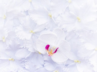 artificial white orchids, texture background