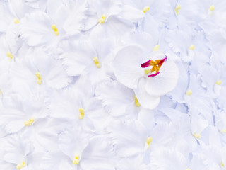 the artificial white orchid texture background