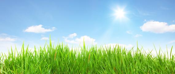 Gras Landschaft Panorama