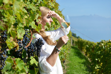 Ripe grapes. Lavaux, Switzerland