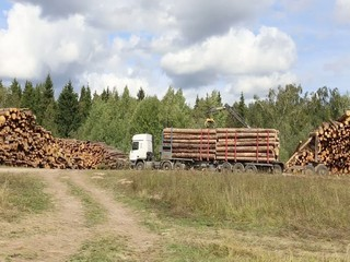 Transportation of logs on the big timber carrier