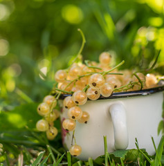 white currant berries in a cup
