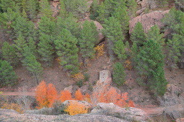 bosque en albarracin