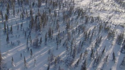 snow forest helicopter sunrise sunset