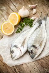 Gilt-head sea bream fish