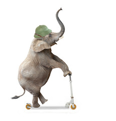Funny elephant with protective helmet riding push scooter.