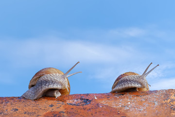 Snails on roof