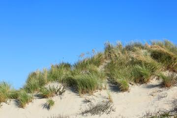 Strandhafer auf Düne