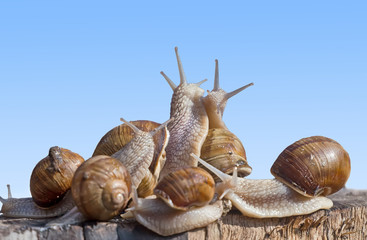 Snail family dancing