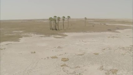 Desert Oasis Sand Arid Humid