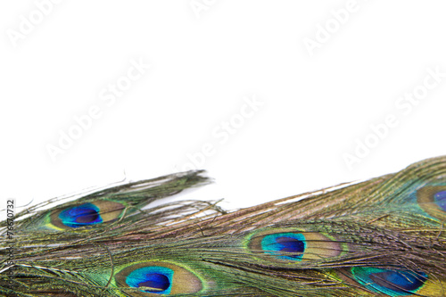 Spoed canvasdoek 2cm dik Pauw peacock feathers isolated white background