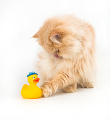Cat kitty is lurking artificial duck colorful toy for pets