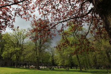 Spring at the old town cemetery in Karlovy Vary.