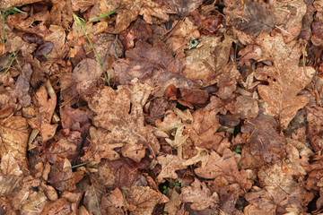Old autumn leaves. Background texture.