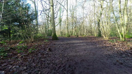 HD Aerial footage going along a footpath in a wood in the winter